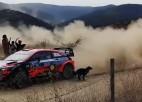 Video: WRC ekipāžu Meksikas rallijā uz ceļa pārsteidz suns