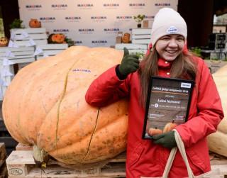 Uzstādīts jauns rekords – Latvijas smagākais ķirbis sver 574 kg