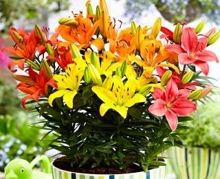 Vairākums sieviešu vēlētos saņemt vīrieša paša audzētus ziedus