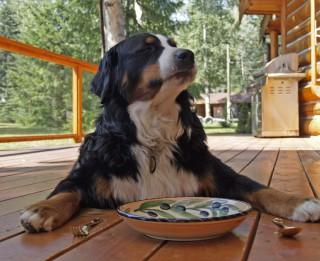 Kam jāpievērš uzmanība, iegādājoties barību savam sunim