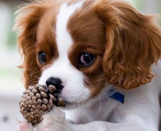 Kāda higiēna nepieciešama sunim