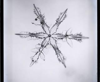 Sniega kristāli un elektriskās dzirksteles japāņu fiziķa Ukičiro Nakajas eksperimentu laikā tapušajās fotogrāfijās