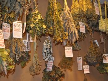 """Foto: """"Augu vara pie miesas un gara"""" - izstāde par pirts un ārstniecības augiem Latvijas Universitātes Botāniskajā dārzā"""