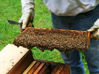 """Labākie Latvijas biškopji saņems """"Riga Food 2015"""" medaļas"""