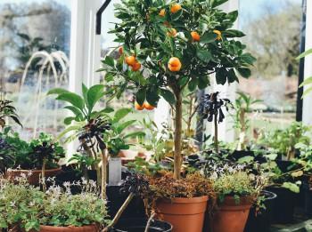 Pieci padomi, kā vislabāk rūpēties par balkona un palodzes dārziņu