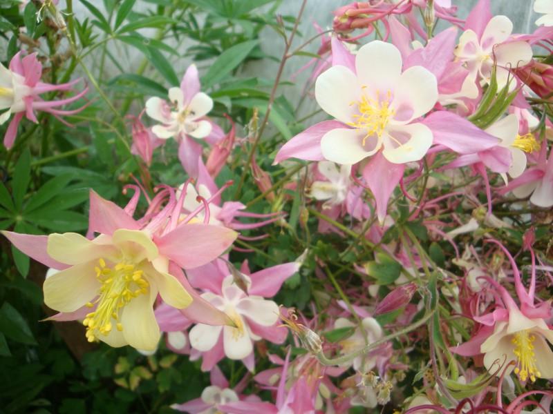 Kā izvēlēties un iegādāties smaržas atbilstoši savam raksturam