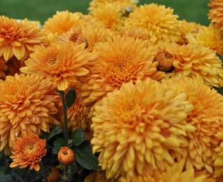 Foto: Zelta rudens LU Botāniskajā dārzā (15 foto)
