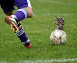 Foto: Futbola fans!