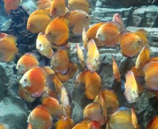 Zelta zivtiņa