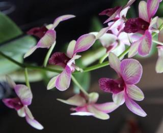 """Dabas muzeja pavasara krāšņākā izstāde """"Orhidejas un citi eksotiskie augi''"""